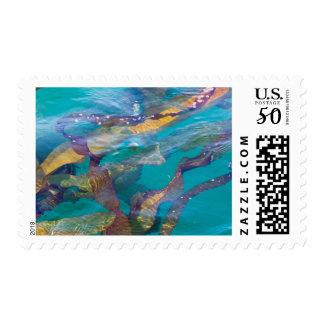 Seaweed Strands Postage