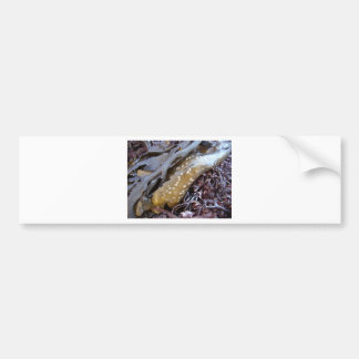 Seaweeds 1 bumper stickers