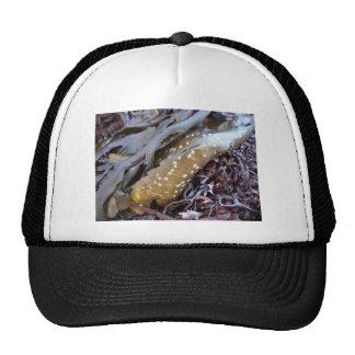 Seaweeds 1 trucker hat