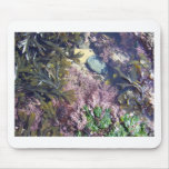 Seaweeds in a pool mousemats