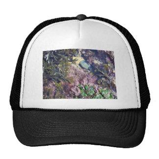 Seaweeds in a pool trucker hat