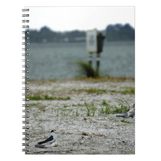 Sebastian Inlet Sanctuary Notebook
