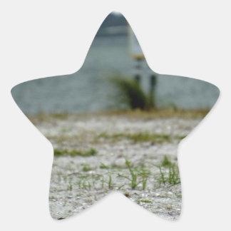 Sebastian Inlet Sanctuary Star Sticker