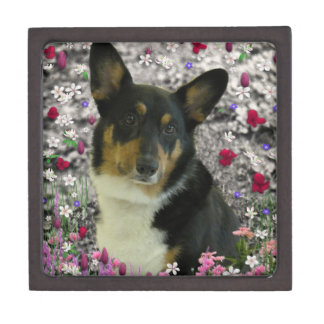 Sebastian the Welsh Corgi in Flowers Jewelry Box