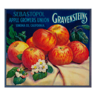Sebastopol Gravensteins Apple LabelSonoma, CA Poster