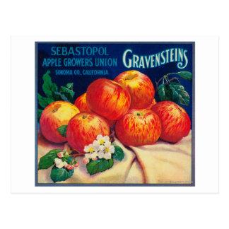Sebastopol Gravensteins Apple LabelSonoma, CA Tarjetas Postales