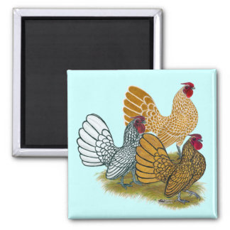 Sebright Rooster Assortment 2 Inch Square Magnet