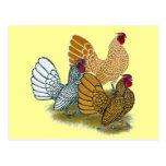 Sebright Rooster Assortment Postcard