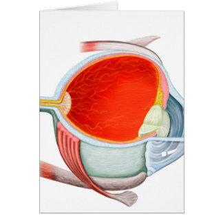 Sección representativa del ojo humano tarjeta de felicitación