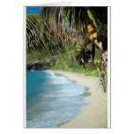 Secluded tropical bay greeting card