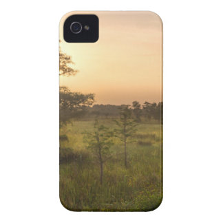 Second Dawn in Fakahatchee Strand iPhone 4 Case-Mate Case