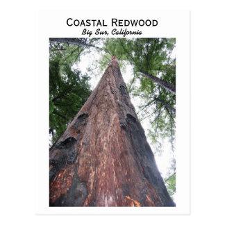 Secoya costera - Sur grande, California Postales