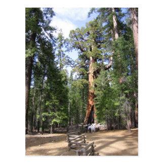 Secoya gigante, parque nacional de Yosemite Tarjeta Postal