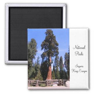 Secoya/imán del parque nacional de reyes Canyon