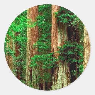 Secoyas antiguas de Giants del árbol Pegatina Redonda
