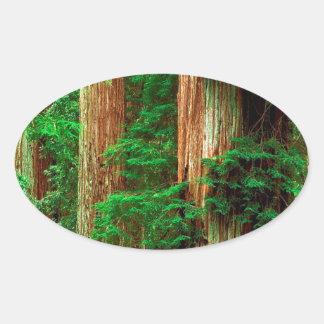 Secoyas antiguas de Giants del árbol Pegatina Ovalada