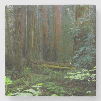 Secoyas en parque nacional de maderas de Muir Posavasos De Piedra
