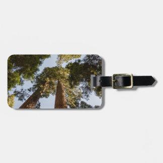 Secoyas gigantes en parque nacional de secoya etiqueta para equipaje