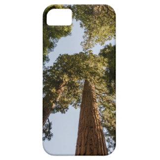 Secoyas gigantes en parque nacional de secoya iPhone 5 Case-Mate protectores