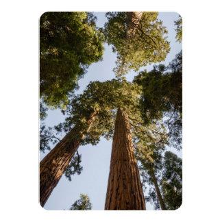 Secoyas gigantes en parque nacional de secoya comunicados