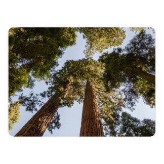 Secoyas gigantes en parque nacional de secoya comunicados personalizados
