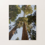 Secoyas gigantes en parque nacional de secoya puzzle con fotos