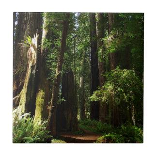 Secoyas y helechos en el parque nacional de la azulejo cuadrado pequeño