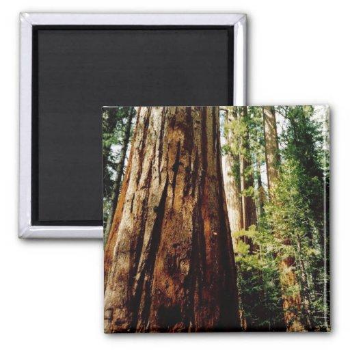 Secoyas Yosemite Imán Para Frigorifico