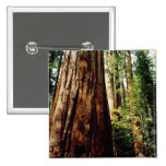 Secoyas Yosemite Pin Cuadrada 5 Cm