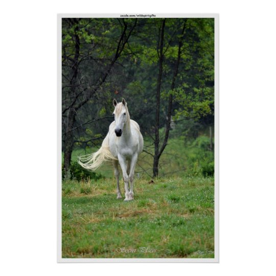Secret Places White Horse in Field Poster