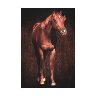 Secret Rock the race horse Canvas Print