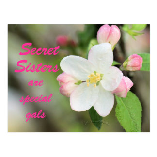 Secret Sister Apple Blossom Postcard - customize