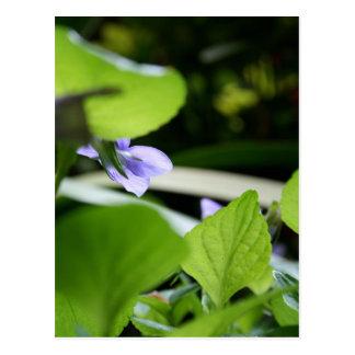Secret Violet - Floral Photography Postcard