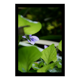 Secret Violet - Floral Photography Poster