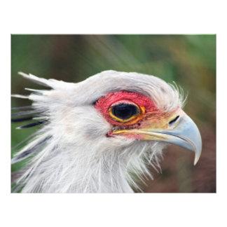 Secretaria pájaro de Suráfrica Plantilla De Membrete