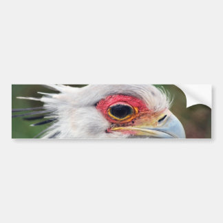 Secretaria pájaro de Suráfrica Pegatina Para Auto