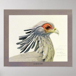 Secretaria pájaro póster