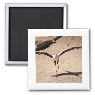 Secretary bird magnet