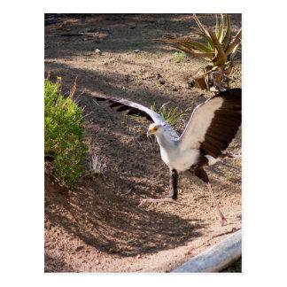 Secretary Bird Postcard