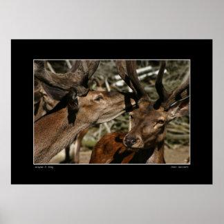 Secretos de los ciervos impresiones