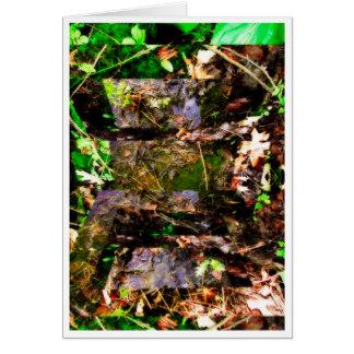 secrets of nature III Card