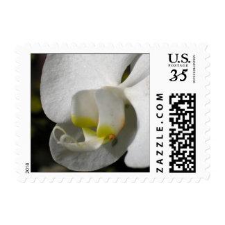 Seda - orquídeas - franqueo 3 del boda sello