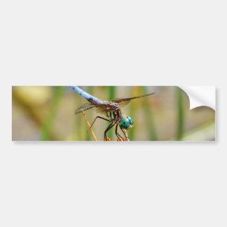 Sedge grass, and Dragonfly Bumper Sticker