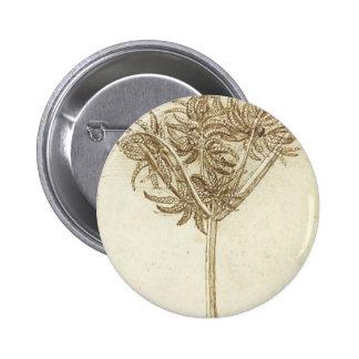 Sedge.jpg by Leonardo da Vinci Button