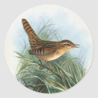 Sedge Wren Vintage Bird Illustration Classic Round Sticker