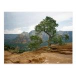 Sedona Tree Post Cards