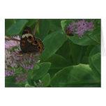 Sedum, Butterfly & Bee Card