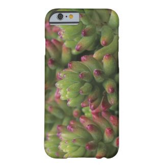Sedum plant, Arizona-Sonora Desert Museum, Barely There iPhone 6 Case