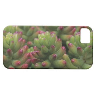 Sedum plant, Arizona-Sonora Desert Museum, iPhone 5 Cases