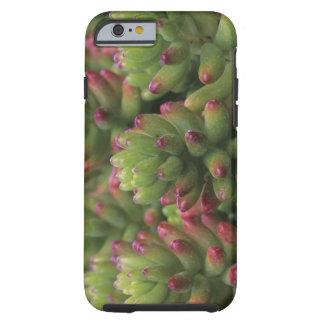 Sedum plant, Arizona-Sonora Desert Museum, Tough iPhone 6 Case